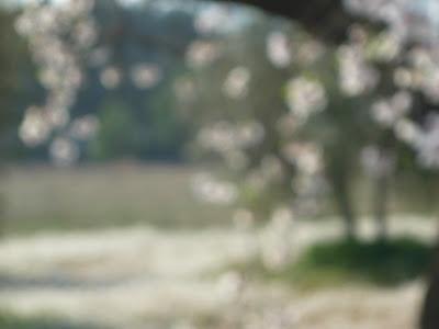 Sutileza (almendros en flor), 2009 Beatriz