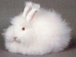 Berbagai Jenis Kelinci Hias