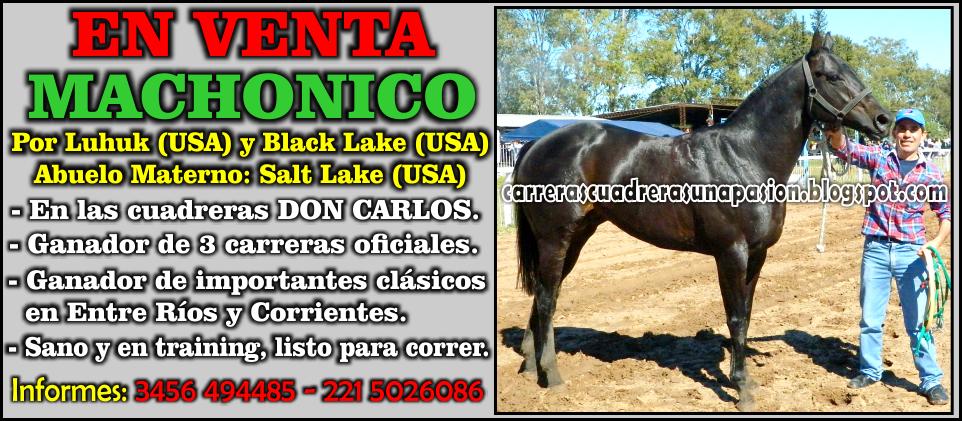 DON CARLOS - VENTA 04.05.2015