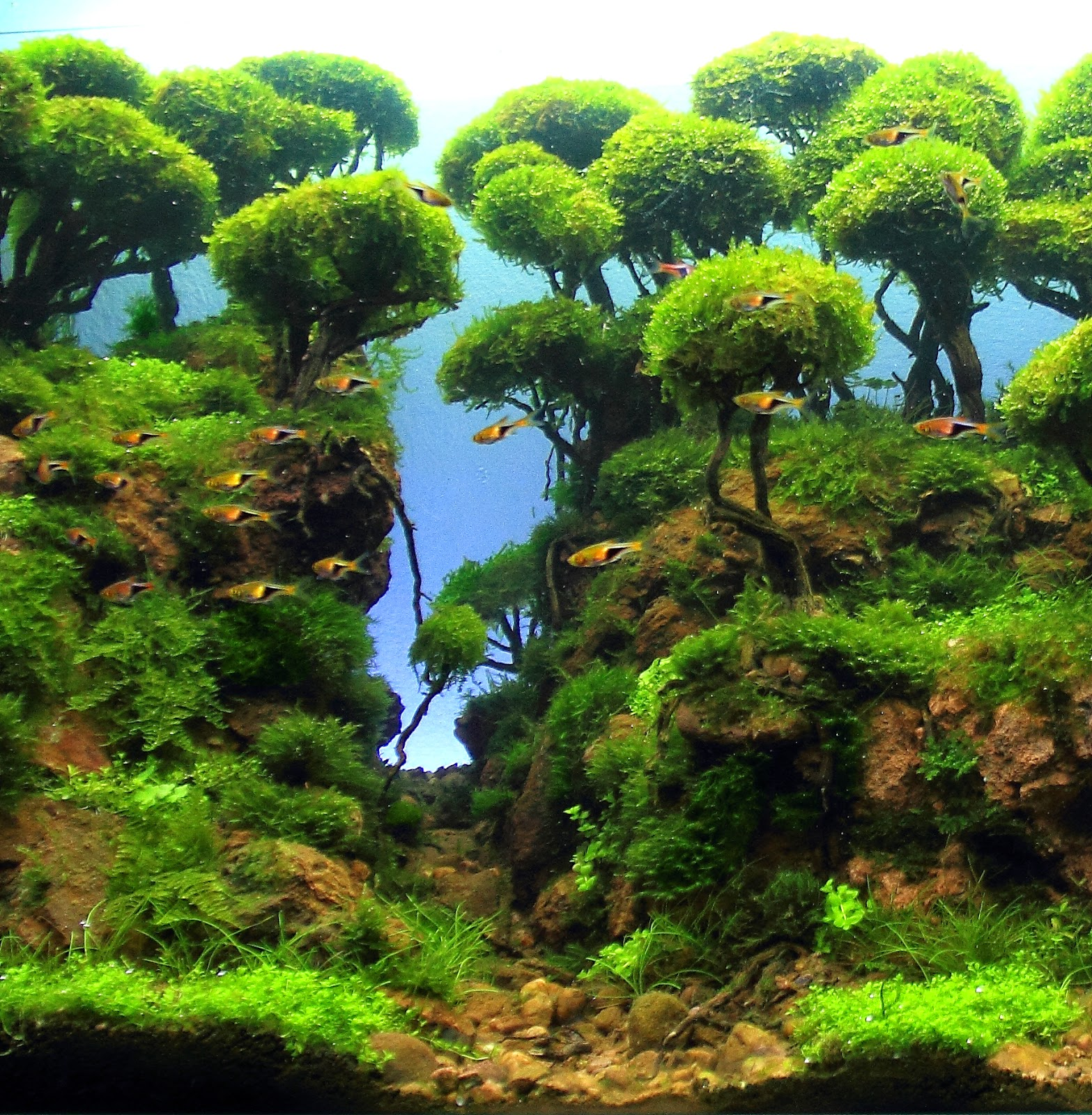 Aquascaping spain galeria - Aquascape espana ...