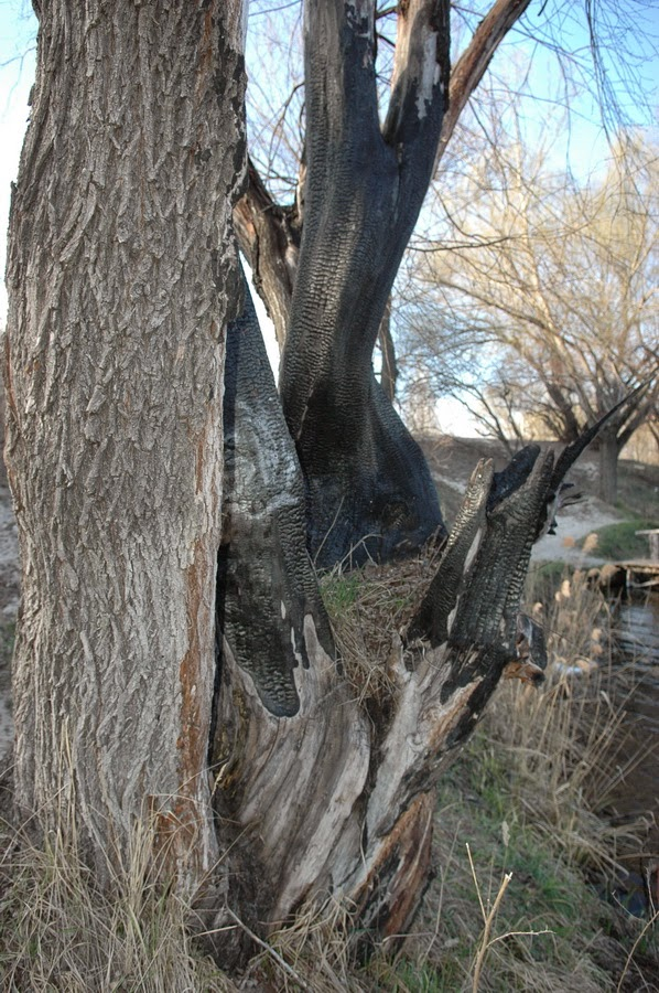Фото Виталия Бабенко:полусгоревшее дерево