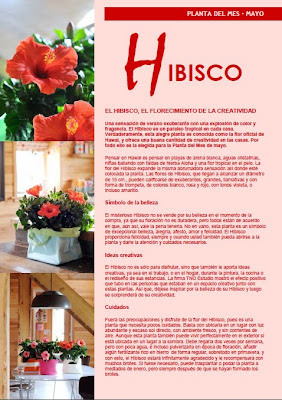 Oficina Holandesa de Flores