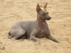 El perro viringo, Patrimonio Natural del Perú