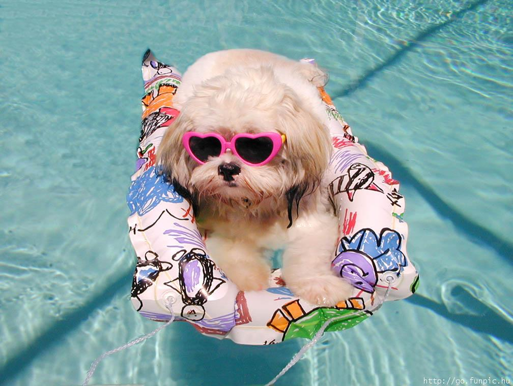 Dogs pictures / fotografije pasa - Page 2 Cute-dog-bath-775822