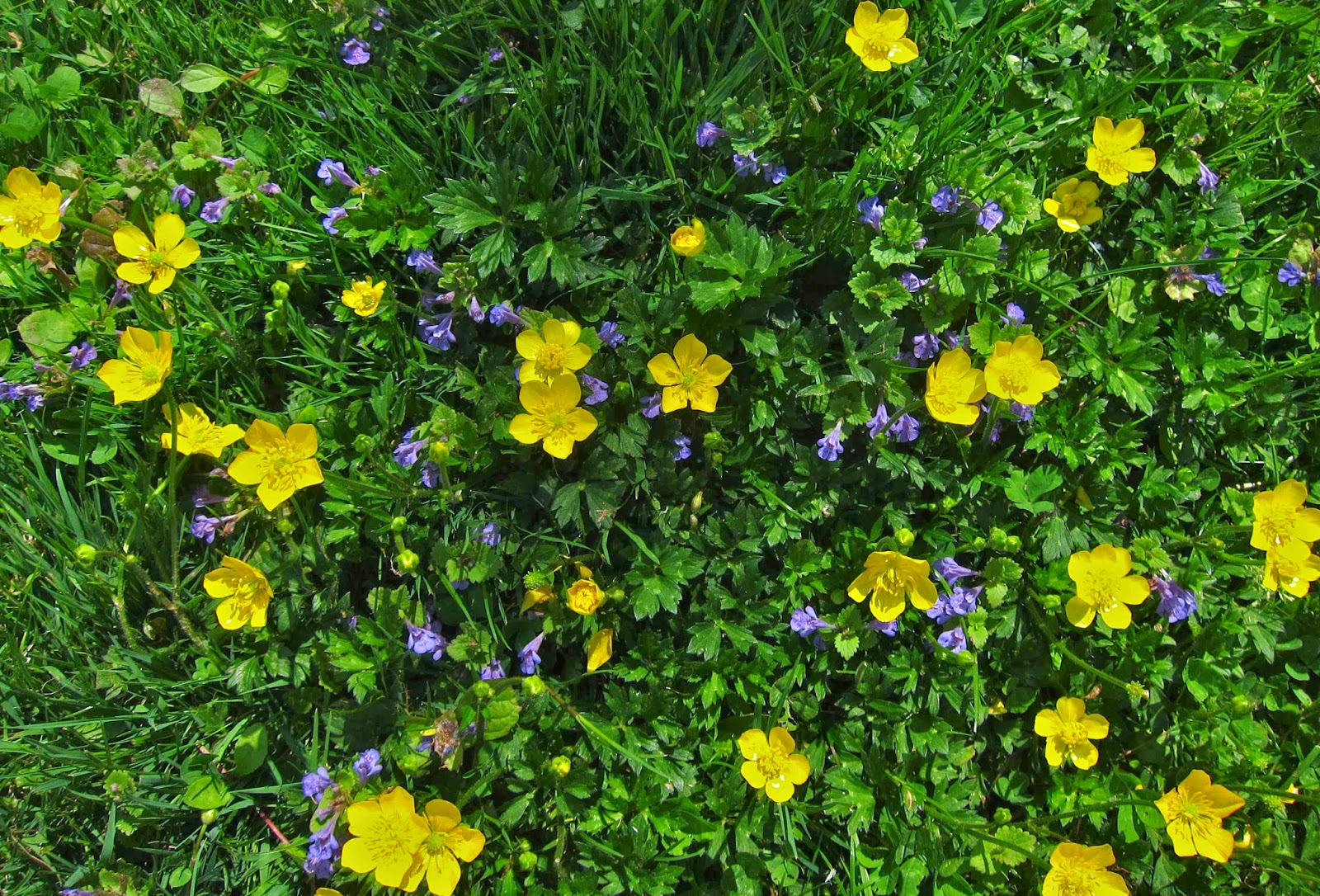 Saratoga Woods And Waterways Carpets Of Floral Beauty
