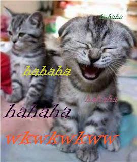 Kucing lucu kata kata