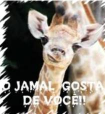 PRESENTE DO JAMAL PRA VOC
