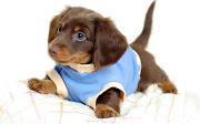 Puppy Dog cute dogs