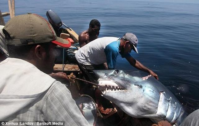 страшный случай на рыбалке