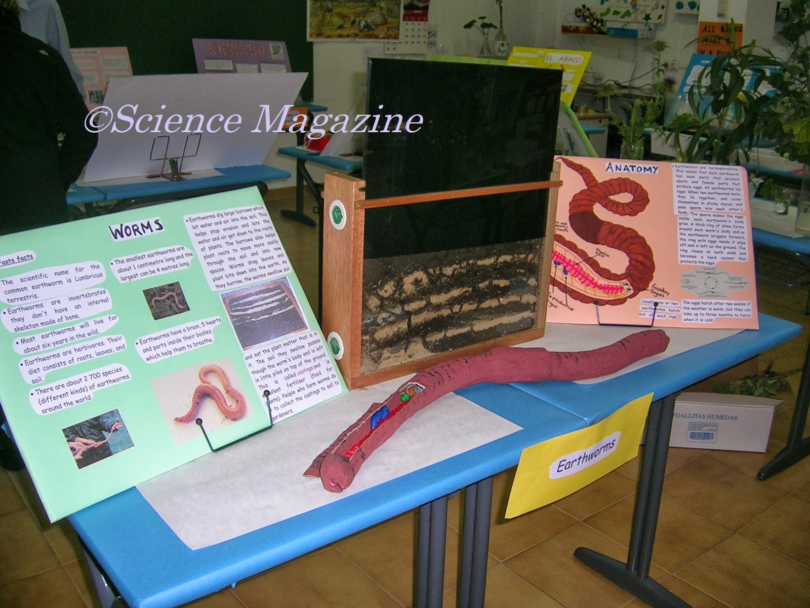Science Magazine Science Fair Project Worms By Victor Iglesias