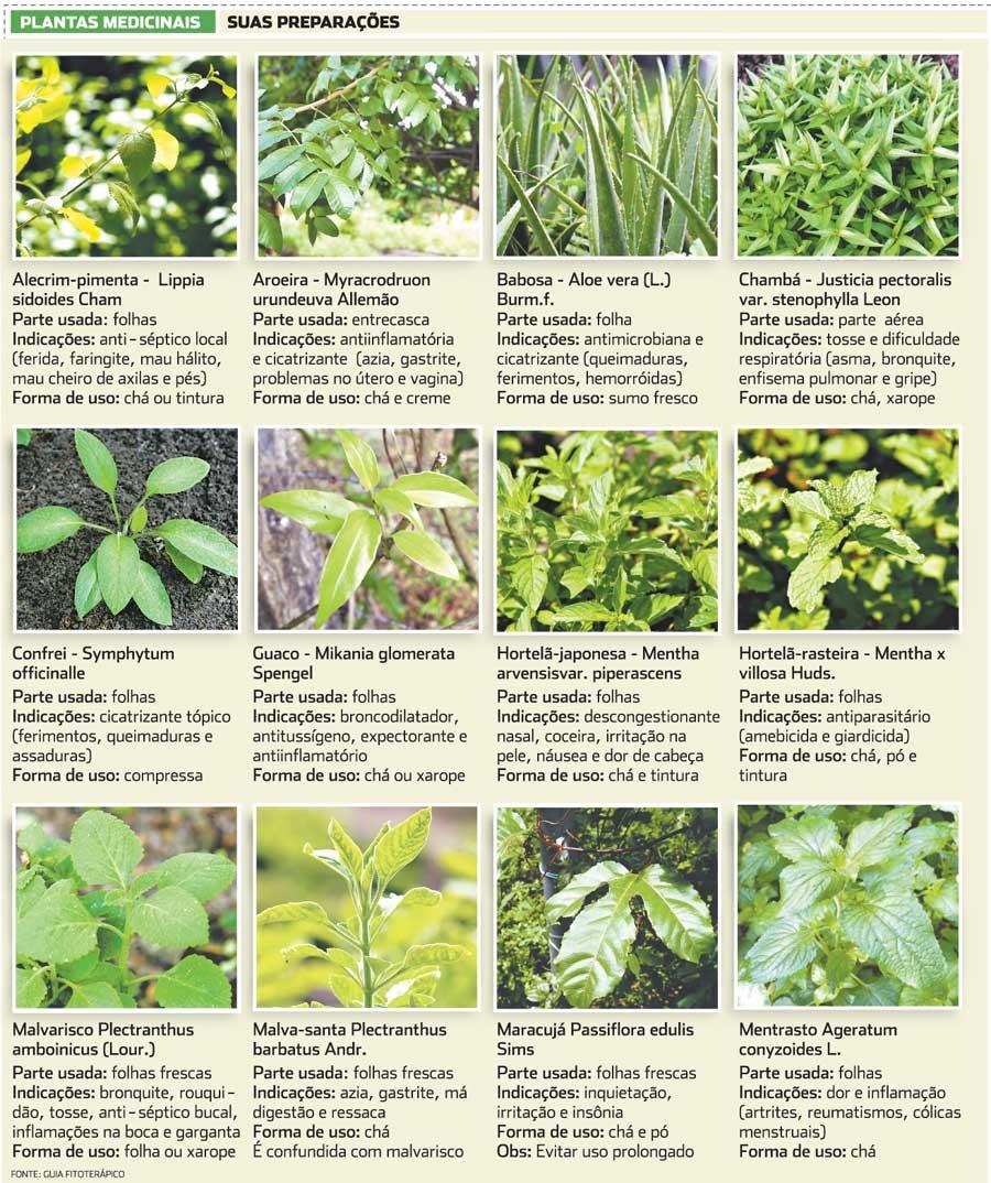 Plantas Medicinais (NódeCachorro; Ervas Medicinais)