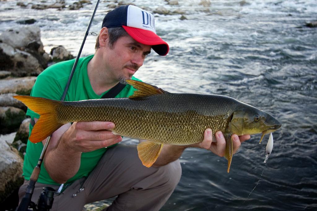 Fishing in croatia and in the neighbourhood golden for Fishing in croatia