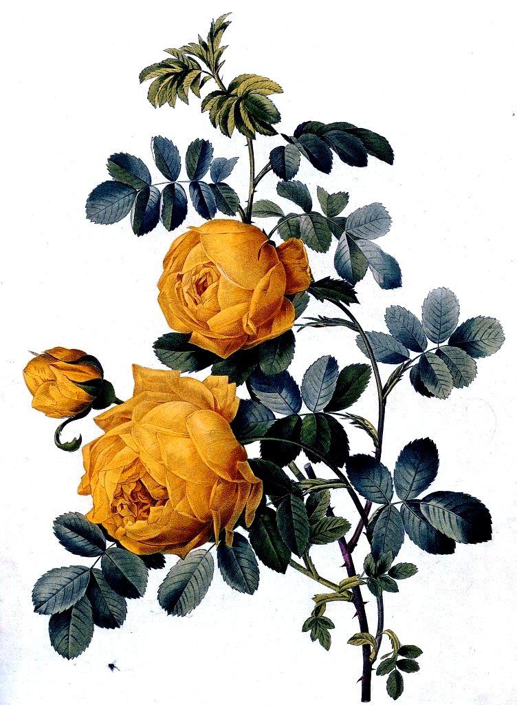 imagenes de flores que brillan y se mueven ImagenesHIP