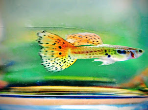 #aquarium #Fish #FishTank #TropicalFish #Goldfish aquarium #aquarium for all
