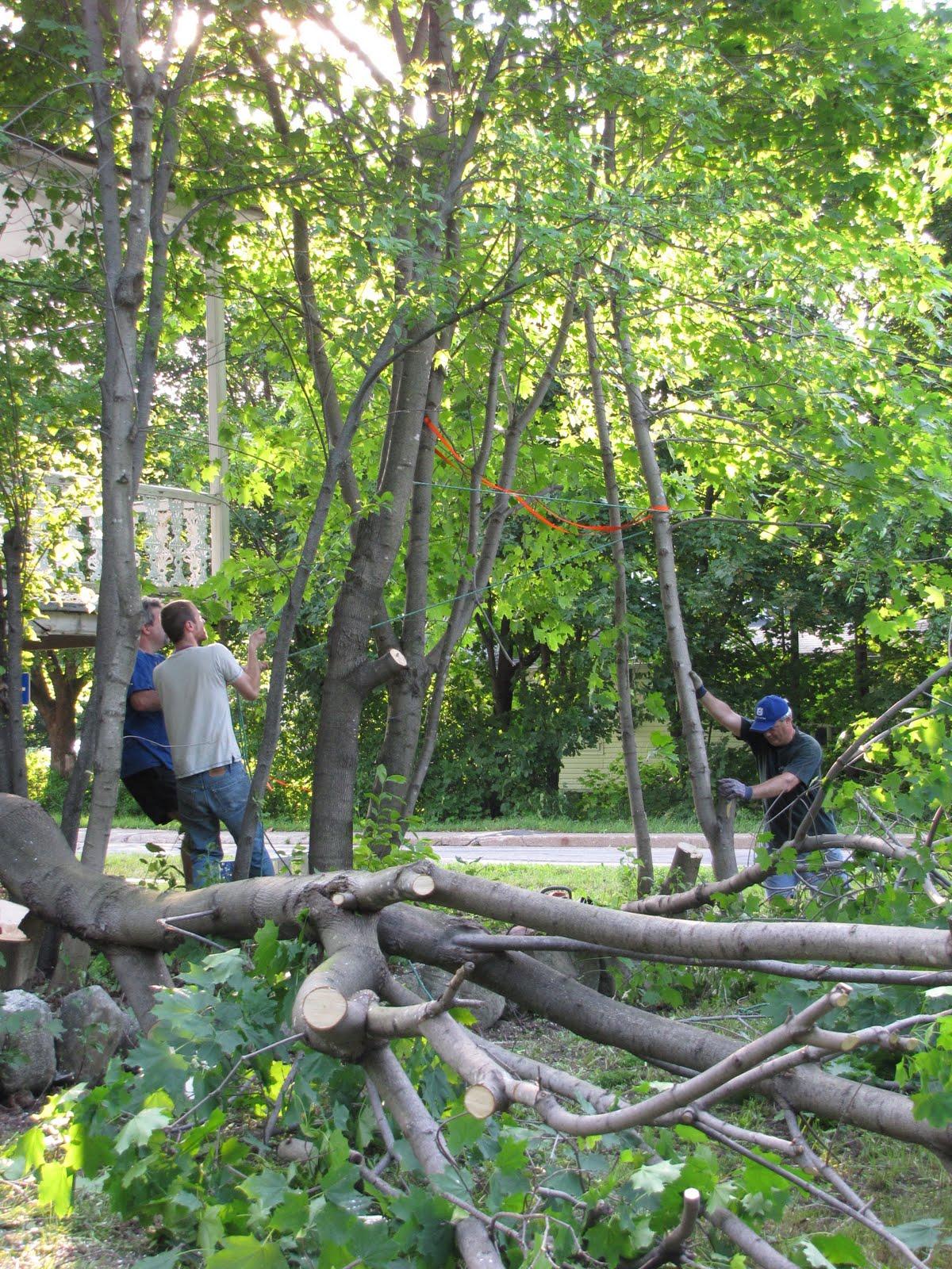 Maison francoeur corv e - Distance plantation arbre maison ...