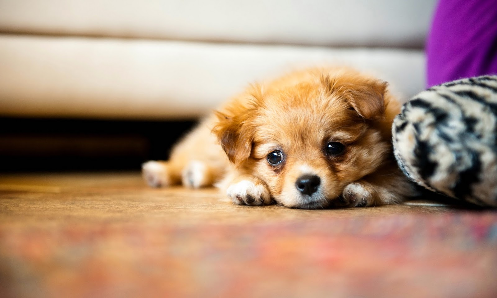 puppy dog wallpaper - photo #23