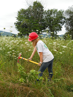 Youth Conservation Corps member helping to cut down invasive multi-flora rose.