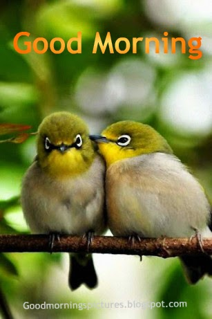 Love Birds Good Morning Wallpaper : Good Morning Beautiful Birds HD Images - AZquotes