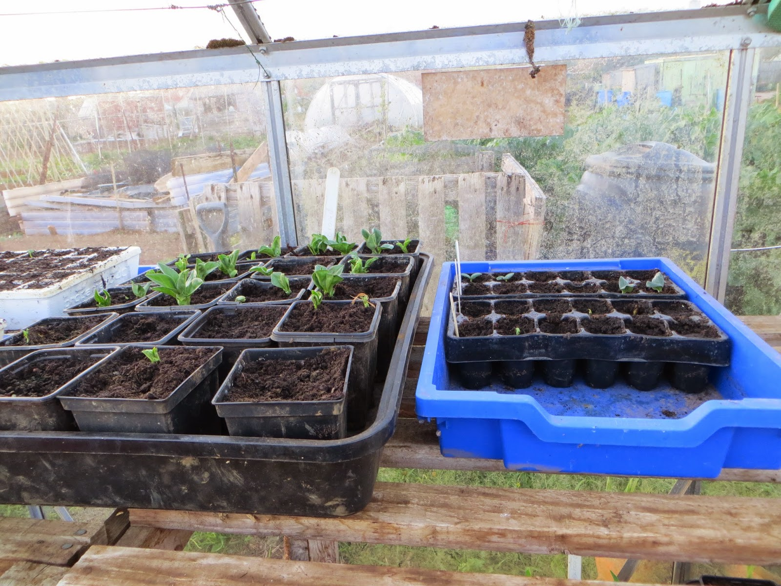 a variety of peppers and broad beans.