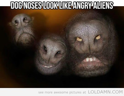 Dog noses or angry aliens