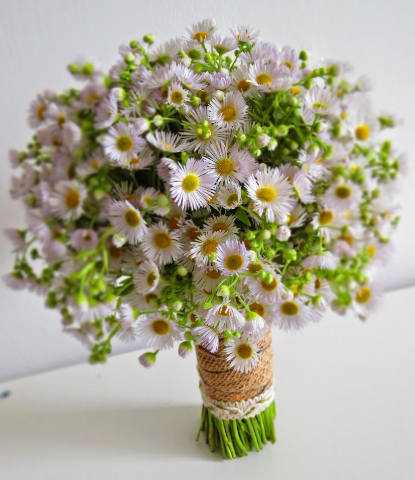 Bridal Flower Plants : Aster wedding flowers ideas