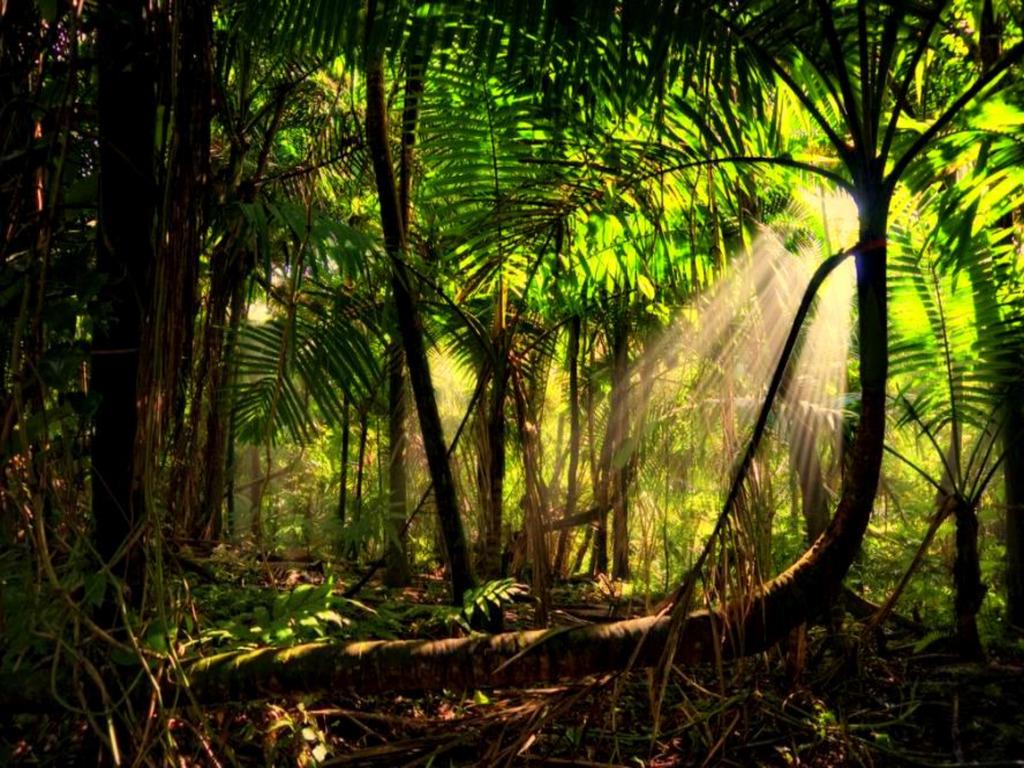 Helga weaver rainforest for Amazon wallpaper