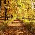 Autumn, fall background. Autumn, fall background