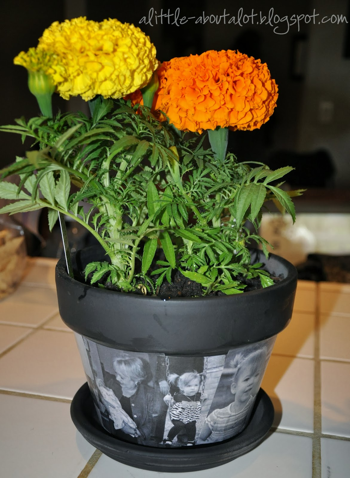 Photo Flower Pot | Mothere's Day Gift | A little about a Lot