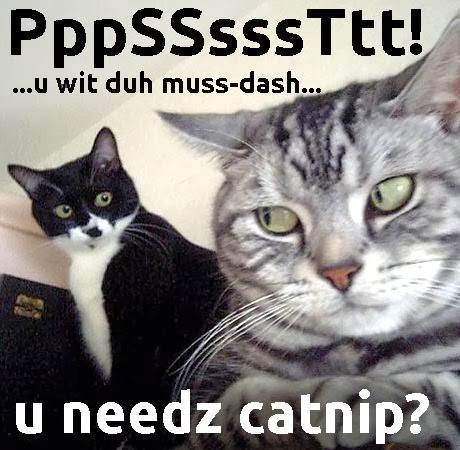 catnip dealer cat meme