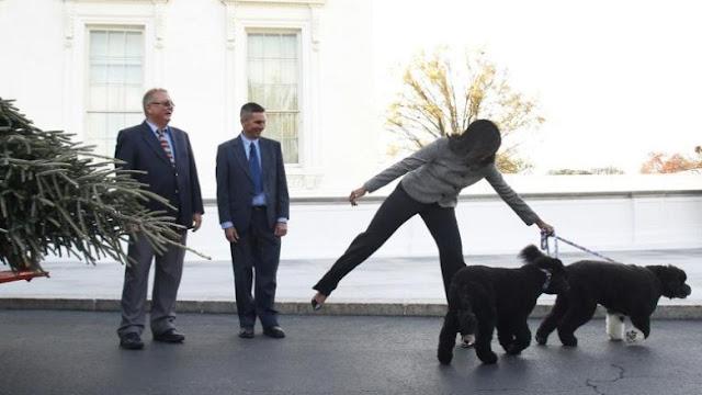 anjing keluarga obama