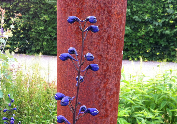 Koboltblå riddarsporre med rostfärgad stolpe bakom.