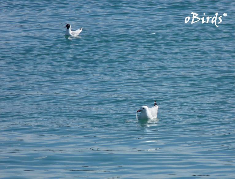 D a 53 puerto de burriana only birds - Puerto burriana ...
