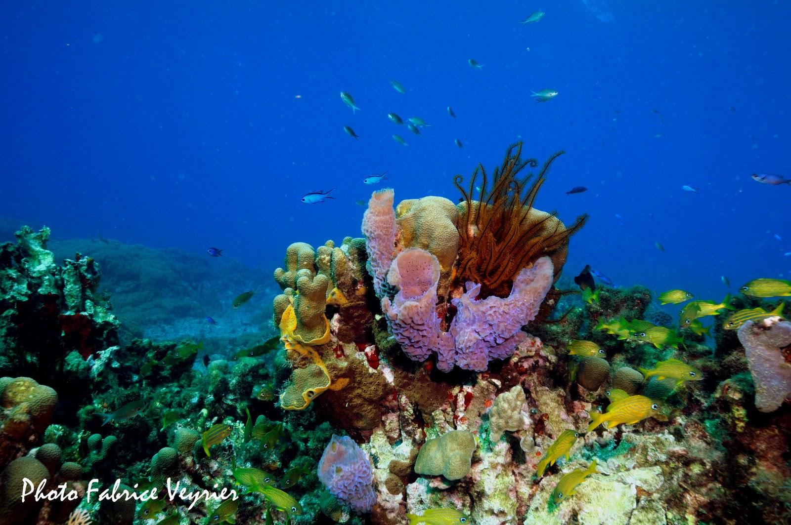 Croisières plongeurs en catamaran : Grenadines et Martinique