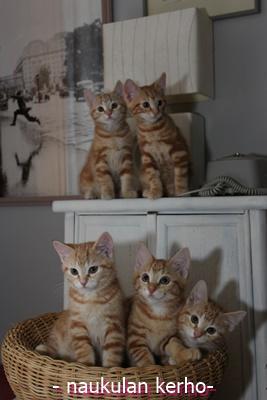 Pinkkitassun N-pentue