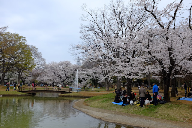 Hanami Sakura Yoyogi Park Shibuya 渋谷 代々木公園花見