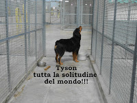 cane adozione Rottweiler Napoli
