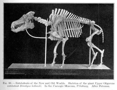 Dinohyus skeleton