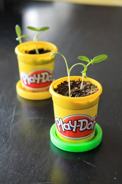 #PlayDohDay party ideas; container planter