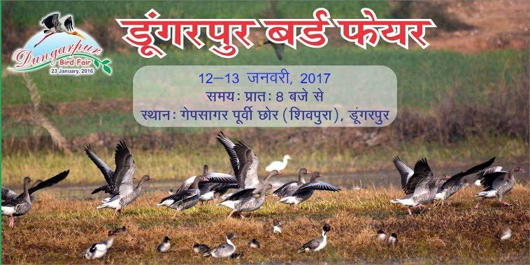 Dungarpur Birds