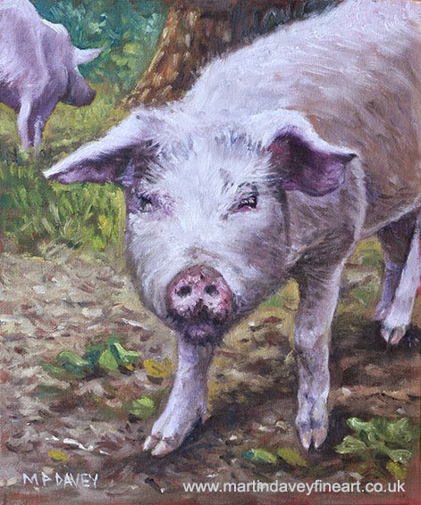 Pink Pig Portrait – oil painting-Martin Davey