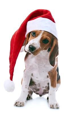 Perrito navideño para compartir en Navidad