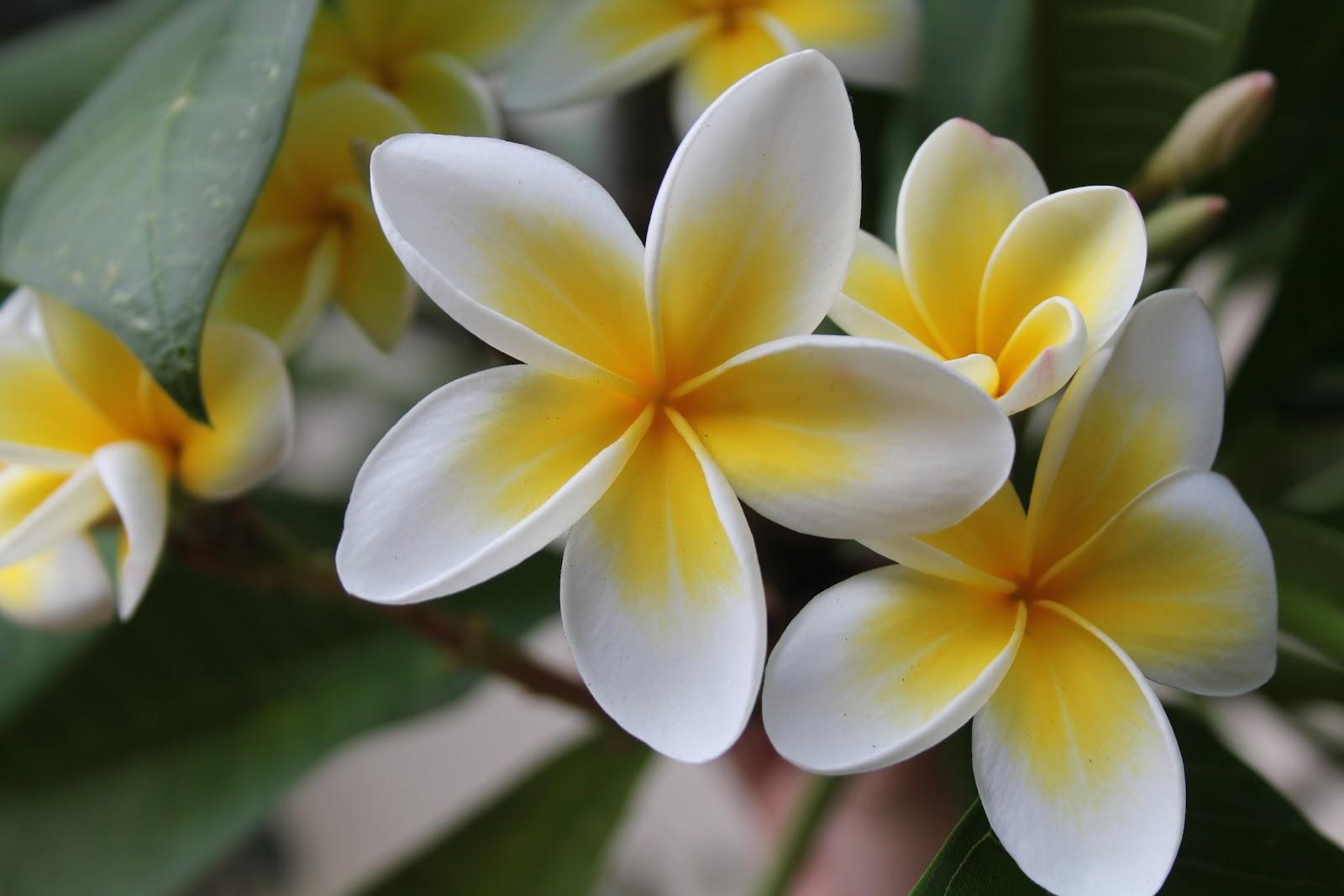 Hibiscus Beach Resort and Spa in Mauritius Indian Ocean