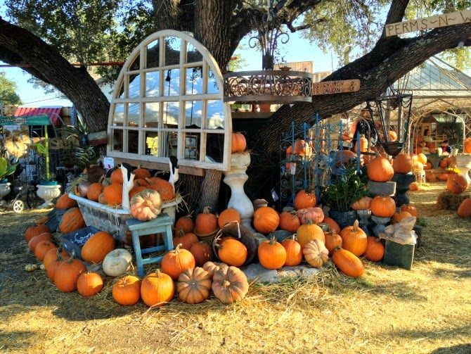 The Holland House: Pumpkin Patch