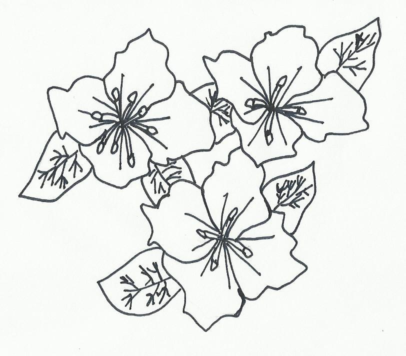 Imagenes De Dibujos De Flores A Lapiz
