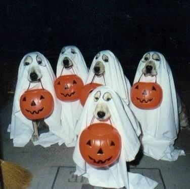the true meaning of the celebration has been replaced somewhat by what hollywood thinks it should mean however in modern celtic ireland samhain is still - The Meaning Behind Halloween