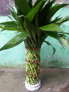 bambu hoki panjang