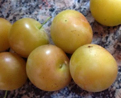Northern California Wild Plums