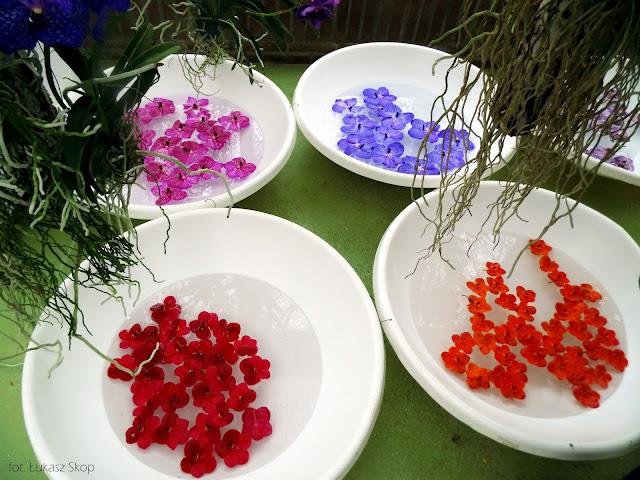 opadłe kwiaty storczyka w wodzie