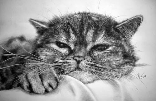 08-Hyper-realistic-Cats-Pencil-Drawings-Hong-Kong-Artist-Paul-Lung-aka-paullung-www-designstack-co