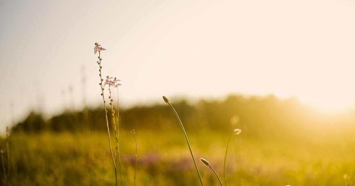 Espacio zen so hum las cuatro leyes de la espiritualidad - Espacio zen ...